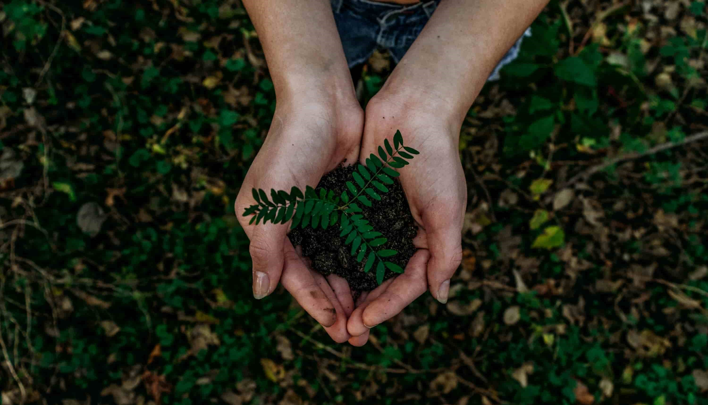 A hand holding green plant in soil.